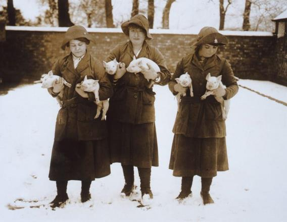 Three Woman's Land Army girls in uniform holding two piglets each, in a snow covered setting